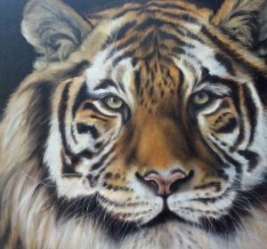 Tiger→